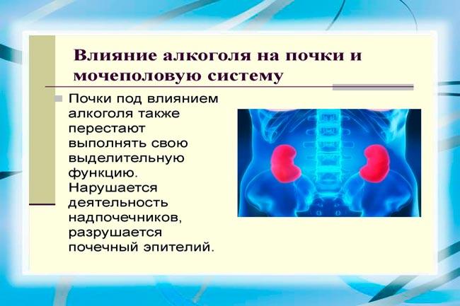 Алкоголь и мочеполовая система